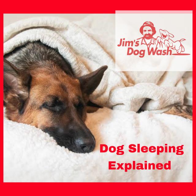 Dog's Sleeping Habits Explained