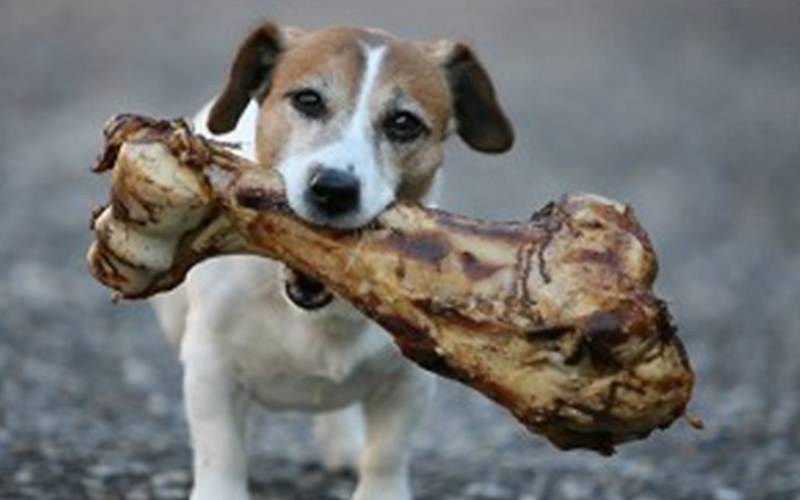 Be Choosy About Dog Chews