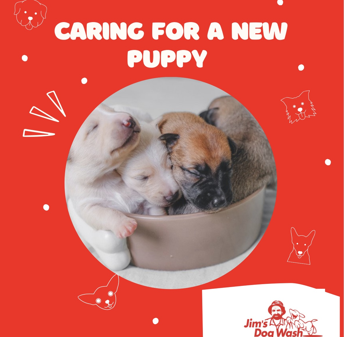 Basic Puppy Care – First Weeks