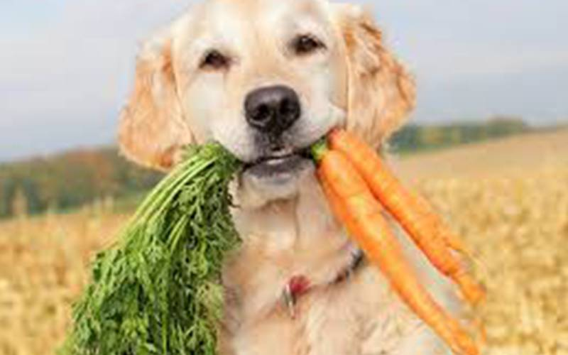 Top Ten Tips To Keep Your Dog Happy and Healthy