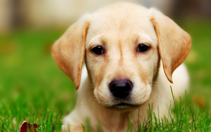 Interesting Fact About Dogs You Probably Didn't Know