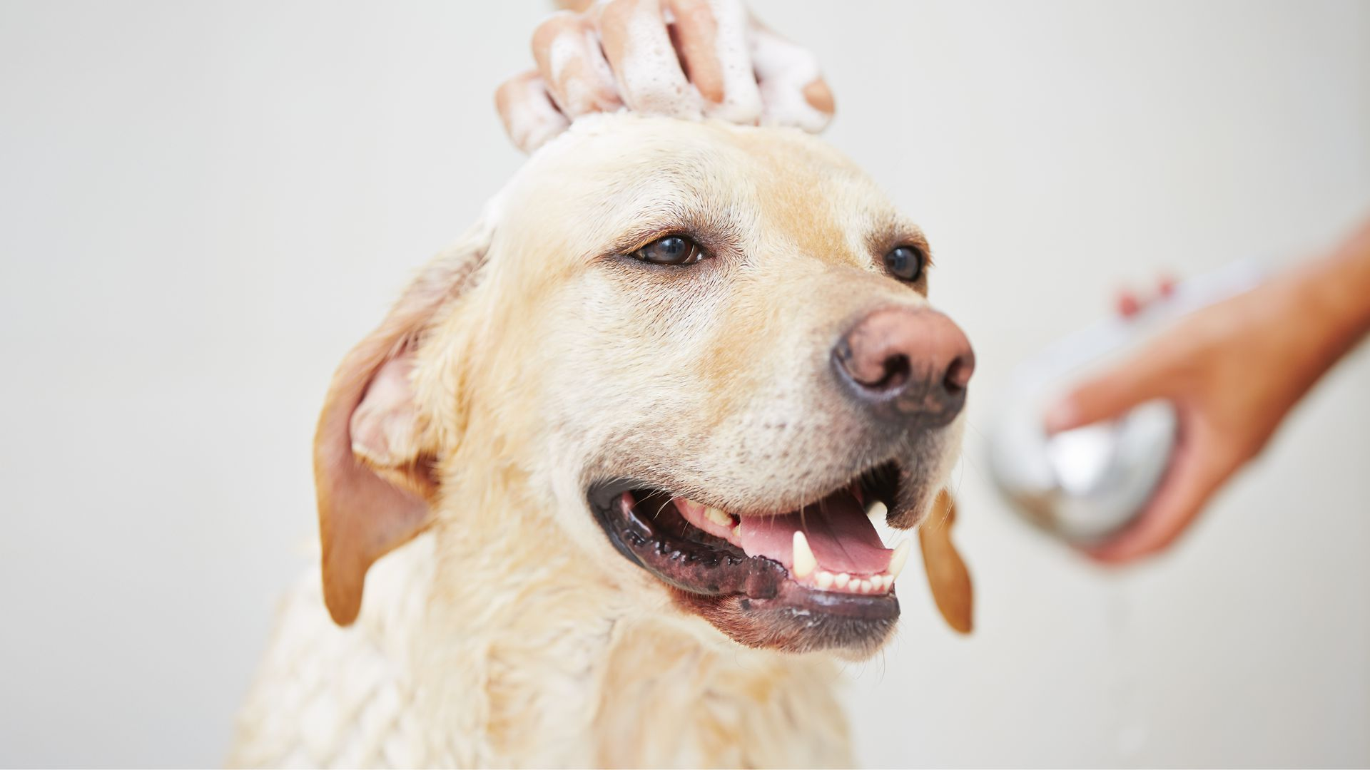 Mobile dog washing grooming jims dog wash 131546 dog grooming service in melbourne sydney brisbane hobart adelaide or perth or one of australias many regional cities from geelong to the gold coast solutioingenieria Gallery