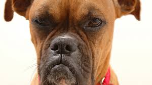 Dogs get jealous and a bunch of other facts you probably didn't know!