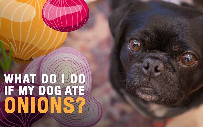 What Happens If Your Dog Eats Onions Or Garlic?