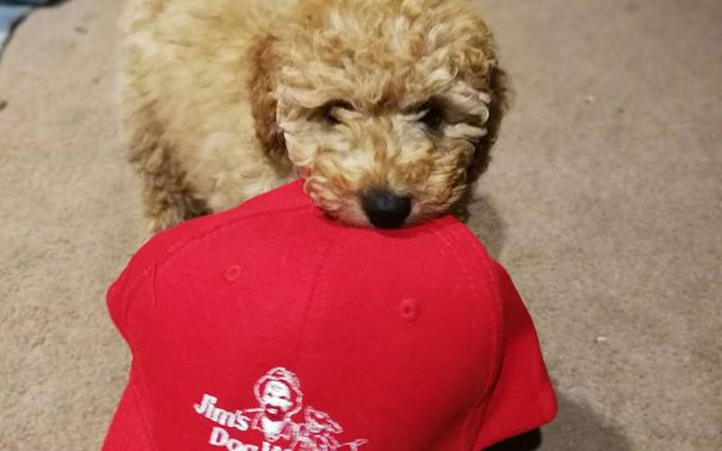 Puppy Training Tips!